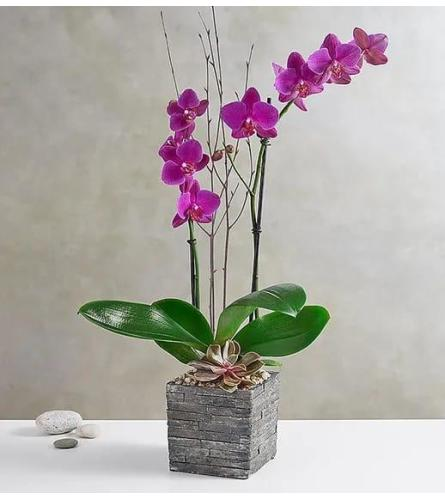 Modern Orchid In Wood