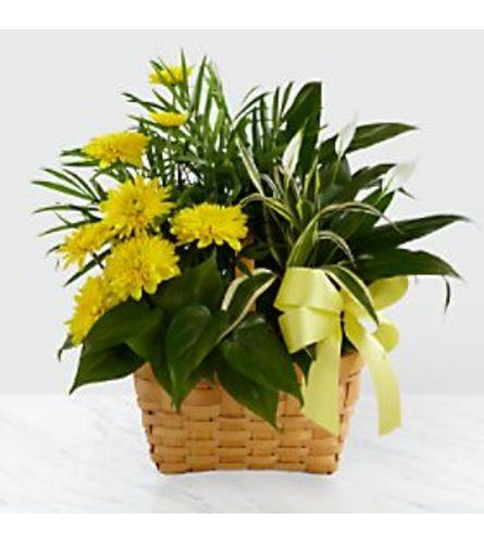 yellow sympathy dish garden