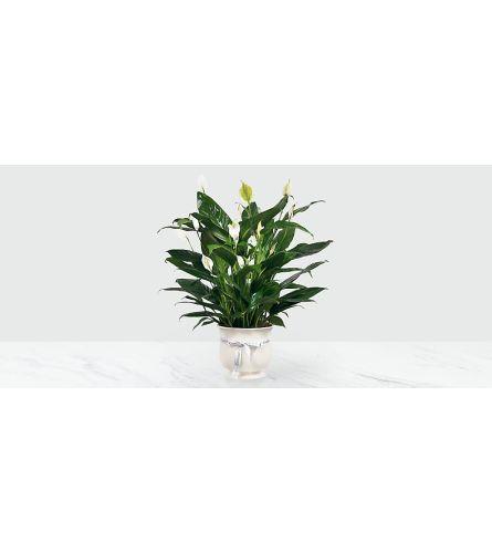 Ceramic SYMPATHY peace AND LOVE  plant