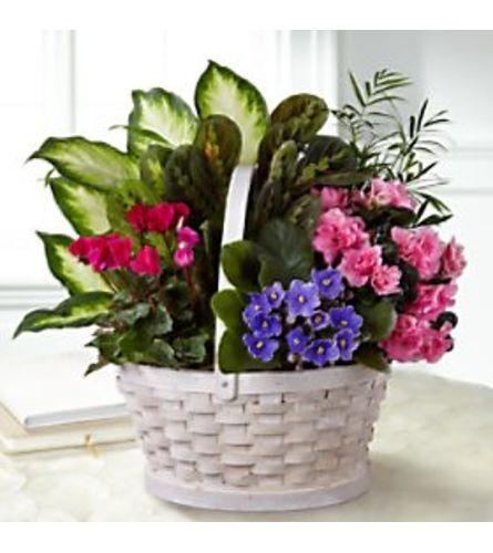 flowering sympathy love garden