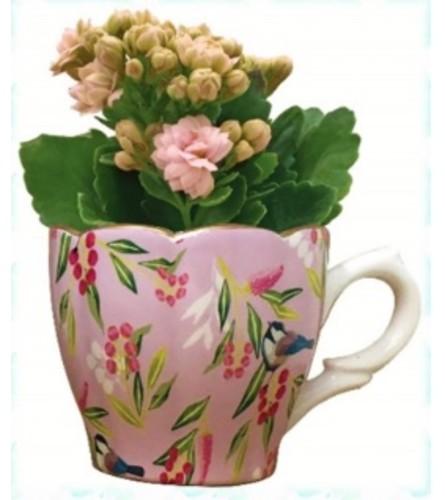 Chickadee Mini Teacup Plant