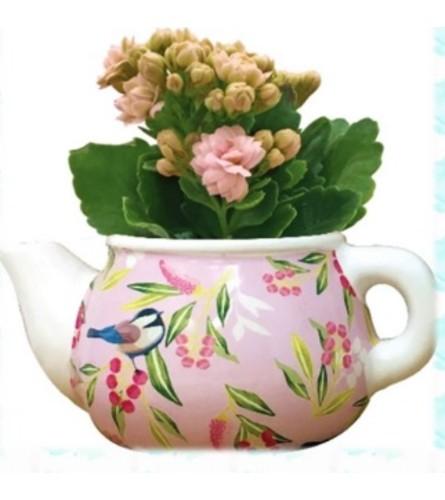 Chickadee Mini Teapot plant
