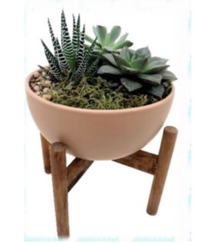 Talia succulent garden Planter