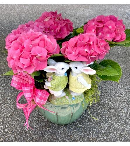 Pink Love- Hydrangea Plant
