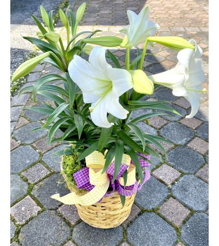 "The ""Beauty & Grace"" - Easter Lily Basket!"