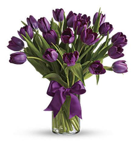 TF Passionate Purple tulips