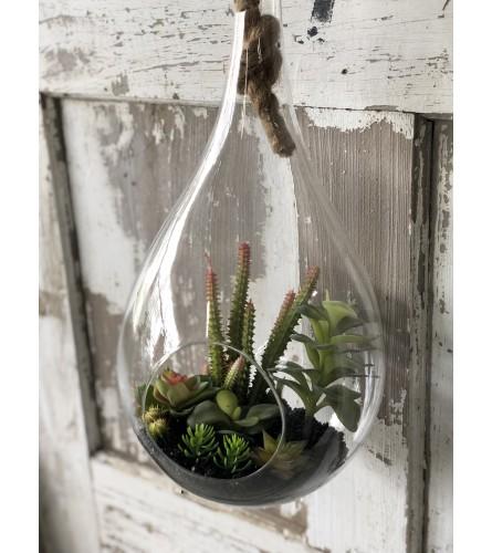 Hanging Terrarium Adorned with Succulents