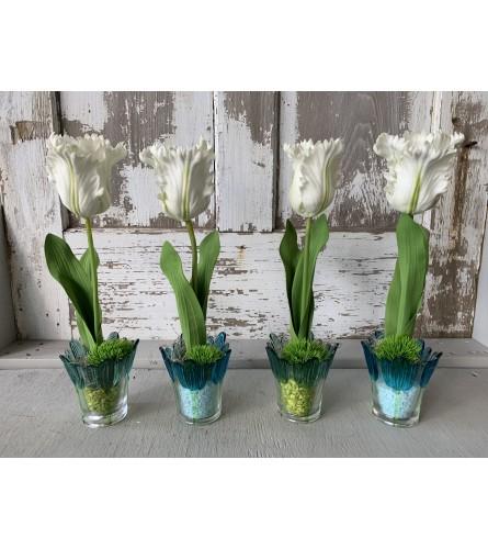 Tulip Potter