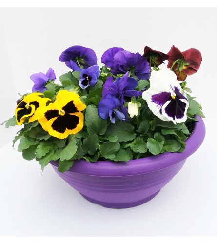 Pansy Planters