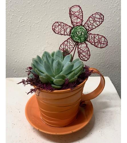 Take a Break Succulent