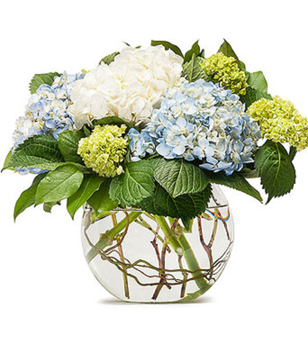 Hydrangeas In Willow Bowl