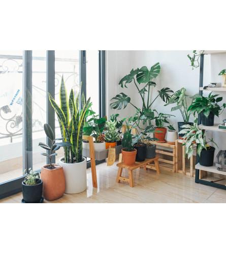 Florist's Choice Plant
