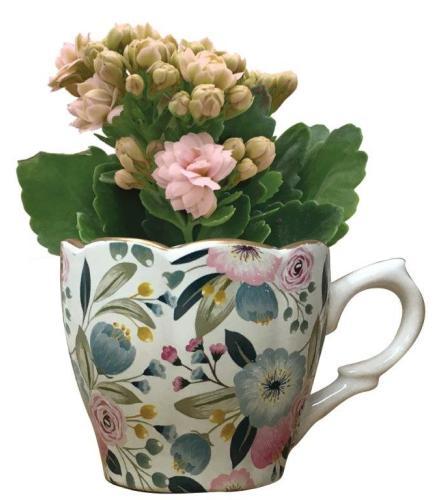 Cortez Mini Teacup with Plant
