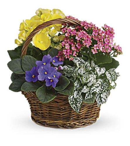 Basket Blooming Garden
