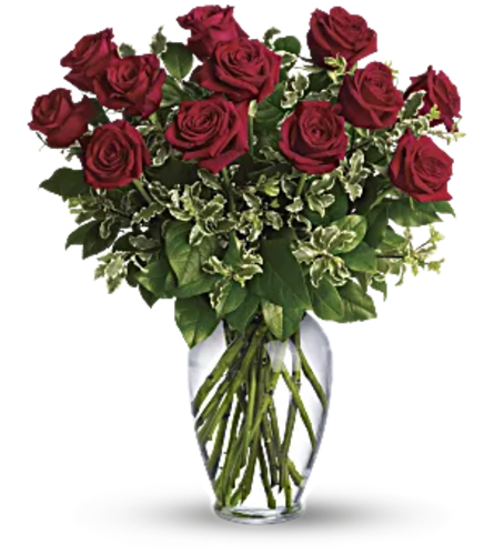 Glorious Red Roses