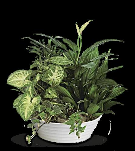 Green Plants Garden