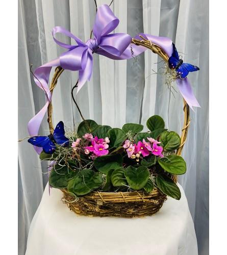 Ellington's Violet Basket - Colors Vary