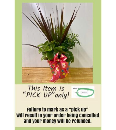 Planter in a Colored Pot