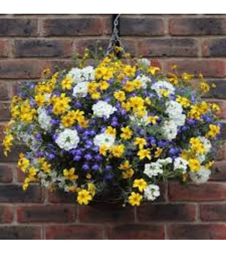 Hanging Annuals Basket