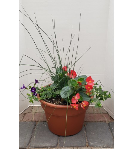 Small Patio Pot for Shade