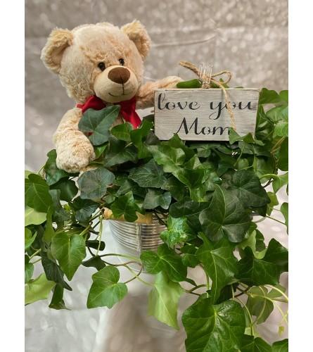Mom's Ivy Garden