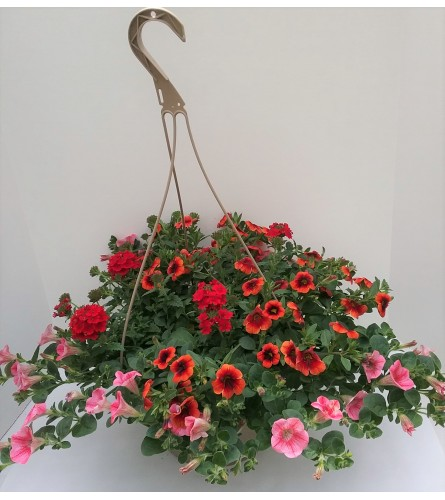 Flowering Hanging Basket Of Fun
