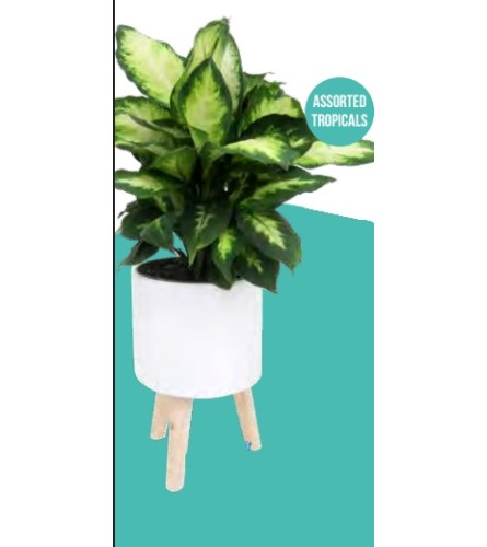 Walter Tropical Plant with Stand