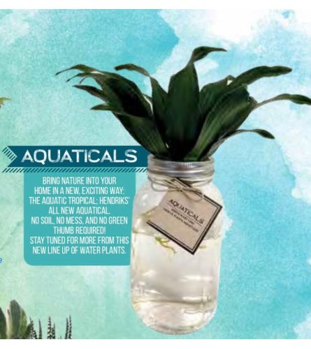 """Aquaticals"" The Aqua Plant"