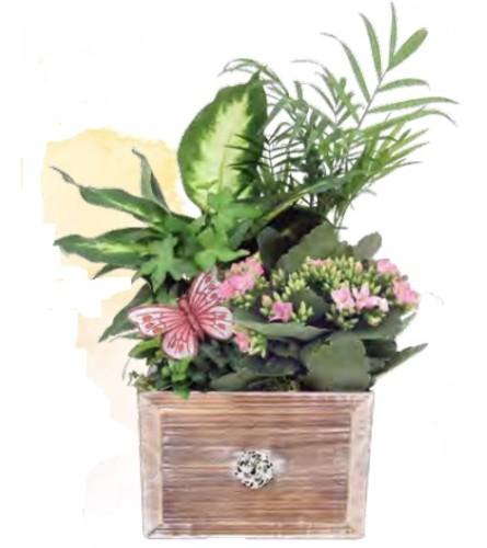 Large Elgin Planter Box