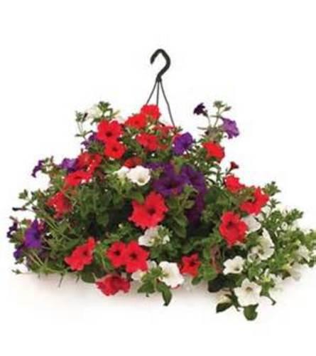 """12"""" Combo Outdoor Hanging Basket"""