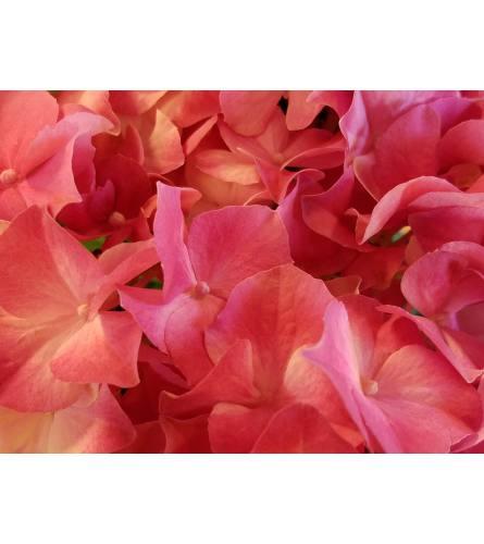 Designer's Choice Wow Her Bouquet