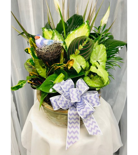 Ellington's Bird Nest Garden - Colors and Styles Vary