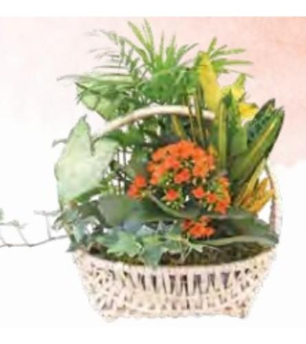 Planter Basket (Delaware)