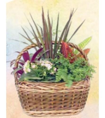 Planter Basket (Aukland Large)