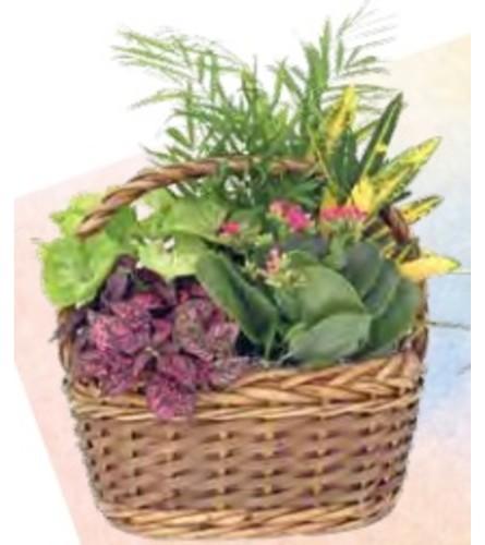 Planter Basket (Aukland - Medium)