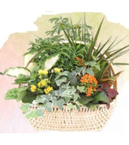 Delaware Indoor Garden Basket (Large)