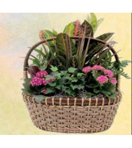 Drake Planter Basket