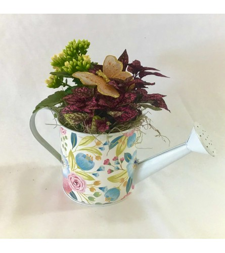 Darcy Metal watering can