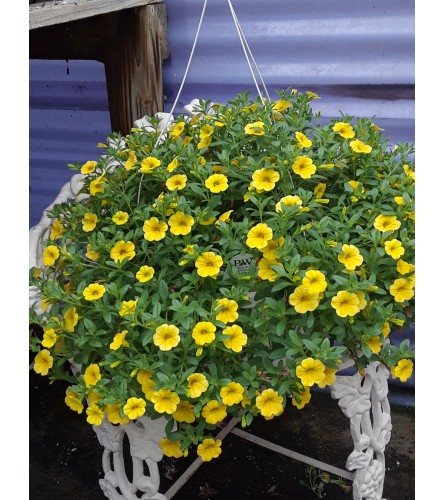 Brightly Colored Hanging Basket