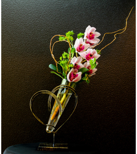 Orchids exclusive