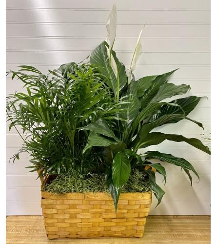 Double Plant Basket
