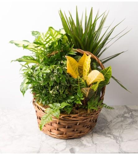 Florists Choice-Planter in Basket  B