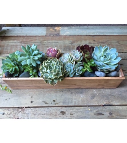 Succulent Garden by Passion Flowers