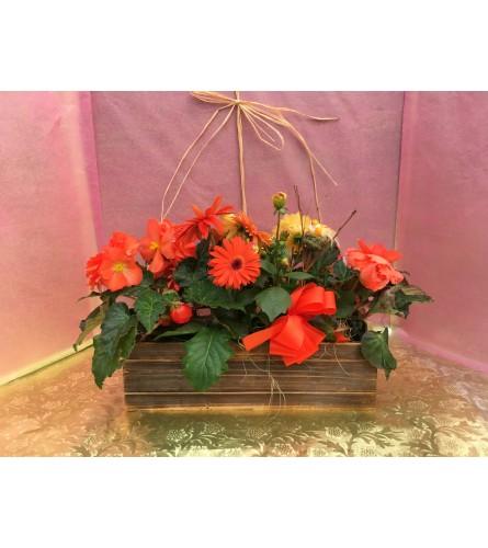 Beautiful Blooming Box - Designer's Choice