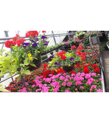 Outdoor Sunny Hanging Baskets