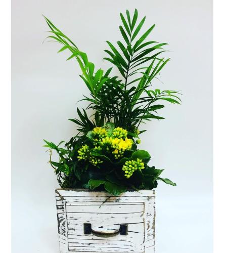 For The Love of Mum Medium Planter
