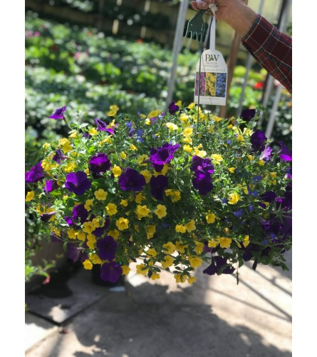 Hanging Basket 12""