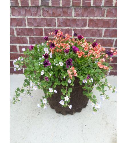 Greenhouse Pulp Planter - Large