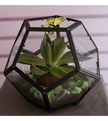 Succulent Solarium