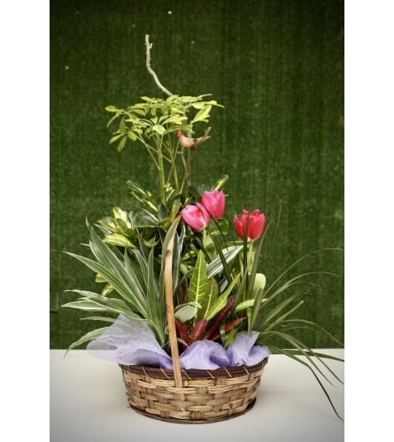 Tulips & Green Garden in a Basket